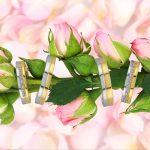 Flowers_0003