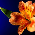 FlowerFolioWeb