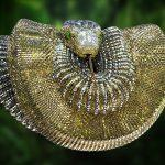 gold-snake-raygun-studio-cgi-3d-rendering