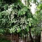 05-b-lao-front-garden