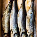 11-trout
