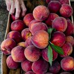 12-peaches