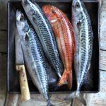 2b.fish