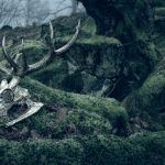 03-stag-in-the-wood