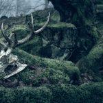 7-stags-skull