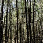woods-01