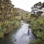 proof-lottiehedley-newzealand2
