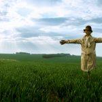image-11-scarecrow