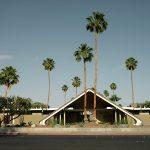 Palm Spring Palms1