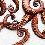 octopus-salad-1004web
