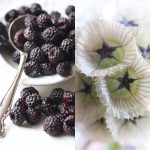 blackberries-scabiosa-new-copy