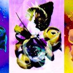 michaelmeisen-obscura-auster
