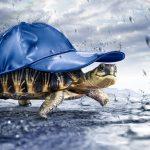 SC_turtle