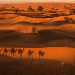 heimbach-desert-camel-25
