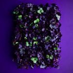 william-lingwood-purplecress-personal-work