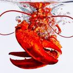 lobstersplash1