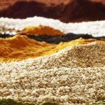 francesco-majo-personal-work3702-seeds-landscape