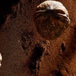 francesco-majo-personal-work3755-nuts-on-planet-mars