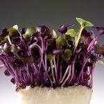 Hilary_Moore_Food_Drink_Photography_Personal.HM.Cress_B