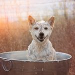 1-los-angeles-dog-photographer-for-commercials
