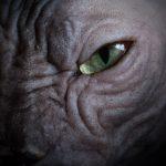1-macro-shot-sphynx-eye-cat-photographer
