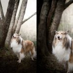 2-commercial-animal-photographer-los-angeles-long-hair-collie-lifestyle