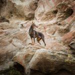 2-commercial-dog-photographer-doberman-on-rock-epic-photo