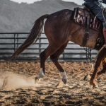 6-ojai-horsmanship-equine-school-photography-82