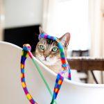 7-best-cat-photographer-los-angeles