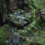10-woods1