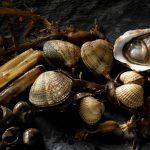09-seashells