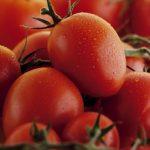 Ft_Tomato