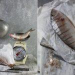 newfish-dippy