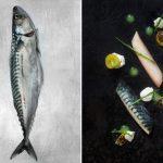 6-mackerel