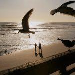 daytona-seagulls