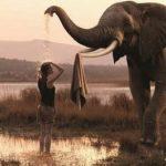 aigle-elephant
