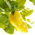 03-lemons-hand-wash-b