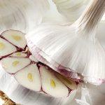 garlic-tif-copy