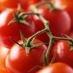 tomato-copy