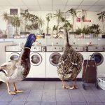 production-paradise-ducklaunderette-f4