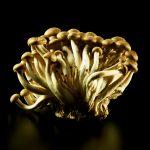 ny-ct-beech-mushrooms-black-jens-johnson-photographer-food