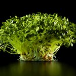 ny-ct-radish-sprouts-black-jens-johnson-photographer-food